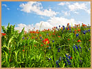 Photography Wild flowers of Texas Giclee Art Print
